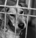 Dog Shelter Stock Photos