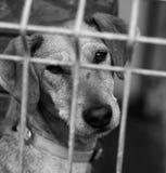 Dog Shelter. S in Europe, sad dog Stock Photos