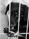 Dog Shelter. S in Europe, sad dog Royalty Free Stock Photography