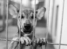 Dog Shelter Royalty Free Stock Images