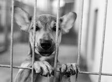 Dog Shelter. S in Europe, sad dog Royalty Free Stock Images