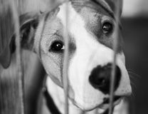Dog Shelter Stock Photography