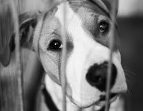 Dog Shelter. S in Europe, sad dog Stock Photography