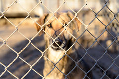 Dog in shelter Stock Images