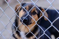 Dog in shelter. Stray dog in shelter locked behind mesh stock images
