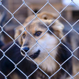 Dog in shelter Royalty Free Stock Photos