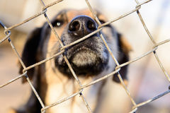 Dog in shelter. Stray dog in shelter locked behind mesh nose close up Royalty Free Stock Images