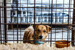 Dog shelter. The dog at the shelter waiting for a better life Stock Photography
