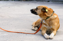 Dog from shelter during walking Stock Photo