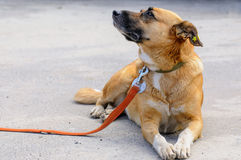 Dog from shelter during walking Stock Image