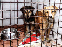Dog shelter - young dogs. The animal cruelty, unfortunately, common Stock Images