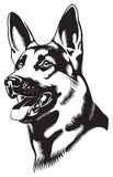 Dog. Shepherd. B & W vector drawing. Sheep-dog