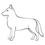 Dog shepherd graphic black white isolated sketch illustration Stock Photos