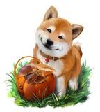 Dog Shiba Inu and a basket of mushrooms Stock Photo