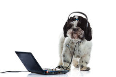 Dog shih tzu call center computer isolated on white background. Shih tzu call center computer isolated on white background laptop high technology headset Stock Photos