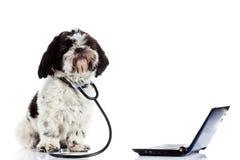Dog shih tzu doctor computer isolated on white background Royalty Free Stock Photos