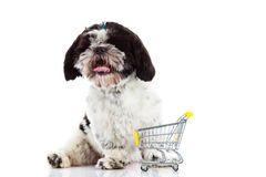 Dog Shih tzu with shopping trolly  isolated on white background dog Stock Images