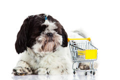 Dog Shih tzu with shopping trolly isolated on white background dog. Shih tzu with shopping trolly isolated on white background pet business concept consum shop stock photography