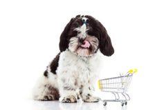 Dog Shih tzu with shopping trolly isolated on white background dog stock images