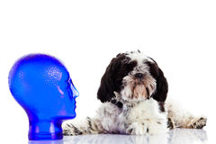 Dog Shihtzu isolated on white background pet head sculpture Stock Photos