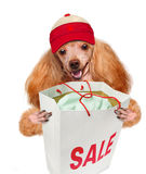 Dog. Shopper. Sales. Royalty Free Stock Photography
