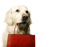 Dog shopping. Golden retriever dog with red shopping bag stock photography