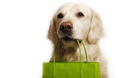 Dog shopping. Golden retriever dog with green shopping bag royalty free stock photo