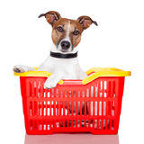 Dog in a  shopping basket. Dog in a red and yellow shopping basket Stock Images