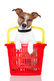 Dog in a  shopping basket. Dog in a red and yellow shopping basket Royalty Free Stock Image
