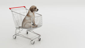 Dog in shopping cart isolated on white. Design made in 3D Stock Photo
