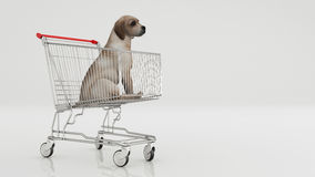 Dog in shopping cart isolated on white Royalty Free Stock Photos