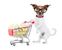 Dog with shopping cart. Jack russell dog  pushing a shopping cart full of tasty treats  and cookies , isolated on white background Stock Photography