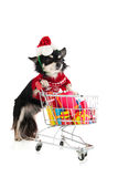 Dog shopping for Christmas. Dog with shopping cart and many colorful presents royalty free stock photography