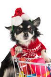 Dog shopping for Christmas. Dog with shopping cart and many colorful presents royalty free stock photo