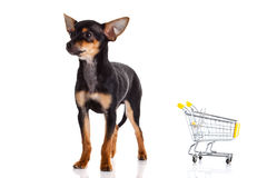 Dog with shopping trolly isolated on white background