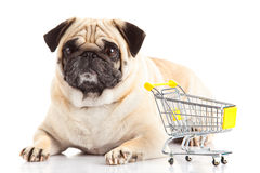 Dog shopping trolly isolated on white background. shopper. Pug dog shopping trolly isolated on white background pet business concept close-up object design royalty free stock photos