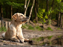 Dog on a shore Stock Photos