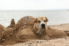 The dog on the shore of the sea, buried in the sand in the shape of a turtle and protruding head Stock Image