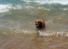 Dog on the shore of the sea plays in the water. Stock Photo
