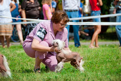 Dog show. SUMY, UKRAINE - JUNE 27: Participants compete in dog show 27, 2010 in Sumy, Ukraine Stock Photography