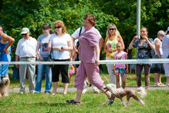 Dog show. Participants compete in dog show Stock Image