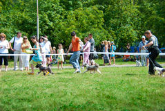 Dog show. SUMY, UKRAINE - JUNE 27: Participants compete in dog show 27, 2010 in Sumy, Ukraine Royalty Free Stock Photography