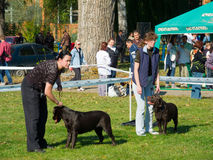 Dog show Stock Photography