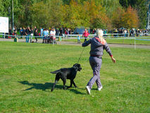 Dog show Royalty Free Stock Photos
