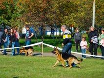 Dog show Stock Image