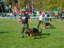 Dog show Stock Images