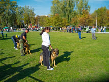 Dog show Stock Image