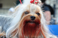 At the dog show Royalty Free Stock Photography