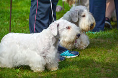 Dog show. In city park Royalty Free Stock Photo