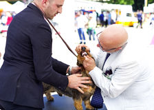 Dog show exhibition Stock Images